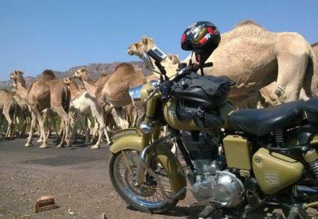 <h3>La rencontre avec les Enfield</h3> Le lendemain matin, après un petit déjeuner aux aurores, c'est la présentation avec les Enfield ! Les trois pilotes sont excités à l'idée d'enfourcher leur bécane pour rouler sur des routes indiennes peu fréquentée par les touristes… C'est parti, je grimpe derrière Ravi direction Ramathra ! Celui-ci m'explique bien les règles de sécurité à suivre pour bien prendre soin de nos riders. On apprécie le niveau motard, et chaque pilote trouve sa place dans notre petit cortège.  La Enfield permet une immersion complète dans le pays, le son du gros mono cylindre intrigue les enfants qui nous entendent arriver de loin et nous courent après lors de notre passage. Sentir la route, voir les couleurs des champs, le sable qui virevolte, les saris colorés des femmes, respirer les odeurs des épices... Tout nos sens sont en éveil !  A chaque arrêt que nous faisons pour prendre un tchai (thé indien) sur le bord de la route, je vois la petite étincelle dans l'oeil de tous et je me dis que je fais vraiment un job extraordinaire : faire vivre une expérience moto hors norme.