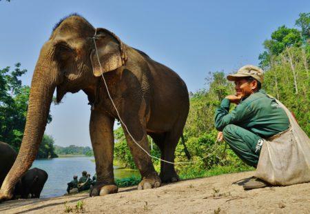 Notre trip nous emmène dans la province de Sayaboury jusqu'au centre de conservation des éléphants. Une démarche unique dans tout le pays : on vient littéralement dormir chez les éléphants et en apprendre plus sur cette espèce en voie d'extinction. On se réjouit d'inclure ce projet responsable dans l'itinéraire, sensibiliser nos motards et donner un coup de pouce au centre !