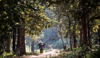 Exclusive trip in Odisha: The Land of the Forefathers