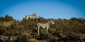safari kruger national park