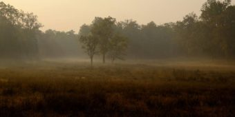 foret aube brume inde madhya pradesh