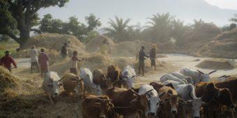 fermier paysan odisha
