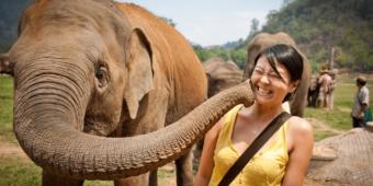 journée éléphants chiang mai