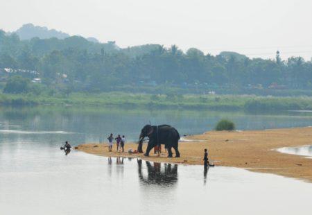 <strong>Quel est ta plus belle rencontre sur les routes du Kerala ?</strong> Des éléphants ! Sur ce même tour, un jour où j'avais tracé une route alternative, je suis tombé avec mes riders sur des Indiens qui nettoyaient des éléphants. Ils servent beaucoup pour les cérémonies religieuses par ici. Ils les bichonnaient ! On a pu les regarder longtemps et même les approcher, c'était génial !  <strong>Pour finir, as-tu une étape coup de coeur en Inde du Sud ?</strong> Oui j'aime beaucoup Munnar, avec ses plantations de thé, on passe aussi au travers de forêts d'eucalyptus c'est magique, on se croirait dans un conte de fée !