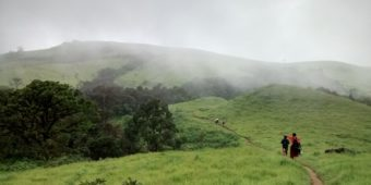 nature south india goa