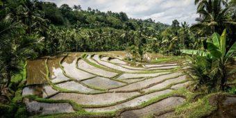riziere indonesie bali