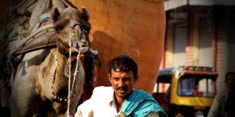 rajasthan man camel
