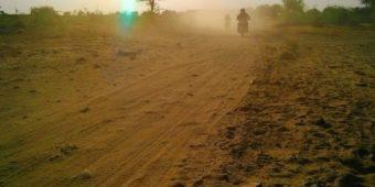desert tree india