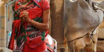 woman children cow rajasthan