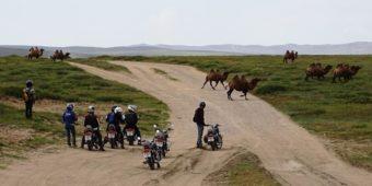 mongolia road trip