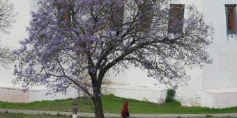 arbre nature bhoutan