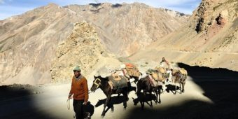 inde himalaya cheval gata loops