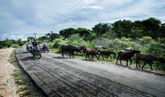 Sri Lanka : un peu d'histoire au pays du thé