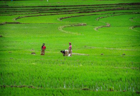 <h3>Du triangle culturel aux plantations de thé</h3>  En fonction du rythme du groupe et si vous êtes avides de culture et d'histoire, la première visite de Dambulla et son temple du Rocher vous en dira long sur la richesse culturelle du Sri Lanka. Vous descendez de vos montures le temps d'excursions incontournables. Le circuit passe évidemment par Sigiriya et Polonnaruwa, deux autres sites inscrits au patrimoine mondial de l'Unesco. Grimpez au sommet de la forteresse de Sigiriya tôt le matin pour jouir d'une vue inoubliable sur les environs. Après une étape moto des plus grisantes au cœur des Knuckles, les plus hautes montagnes du Sri Lanka, vous pénétrez sur les hauts plateaux, dans la région des plantations de thé. C'est l'occasion de visiter une fabrique de thé pour en savoir plus la boisson nationale. Plusieurs randonnées sont possibles à Ella, pour prendre un peu de hauteur au Little Adams's Peak par exemple. Pour les plus paresseux, la visite d'un jardin d'épices ou une séance de massage traditionnel sont également au programme. Les visites culturelles se succèdent jusqu'à Galle, en passant par exemple par le site bouddhiste magnifique de Buduruwagala ou en gravissant encore un rocher, celui de Mulkirigala.