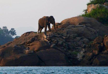 <h3>Un écosystème protégé</h3>  Au Gal Oya Lodge, lasimplicitéva de pair avec lerespect de la nature. L'espace est harmonieusement aménagé, de spacieux bungalows, un restaurant ouvert aux quatre vents et une piscine idéalement lovée au pied des montagnes. Nous profitons d'un peu d'intimité au milieu de notre voyage moto pour nous relaxer et découvrir le Sri Lanka autrement. Nous laissons notre moto le temps d'une journée et profitons de la piscine pour nous rafraîchir, partons pour une marche dans la jungle environnante, et ne manquons pas le spectacle magique des éléphants sauvages qui viennent se désaltérer au bord du plus grand lac du pays. Cet été, c'est décidé ! Direction le Sri Lanka pour un voyage moto en Royal Enfield inoubliable…