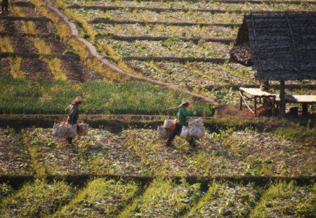 <h3>Les routes de montagne du Triangle d'Or</h3>  Confiants nous décidons de nous aventurer sur les plus petites routes possibles pour découvrir à notre manière l'emblématique Triangle d'or. A la frontière du Laos, de la Thailande et de la Birmanie il a vu prospérer la culture et le commerce de diverses drogues jusqu'au milieu des années 80. Pour sécuriser la zone, l'armée thailandaise a fait creuser de toutes petites routes de montagnes d'une qualité incroyable pour le plus grand plaisir des motards que nous sommes. A la frontière de la Birmanie, nous enchaînons les virages, les montées, les descentes au coeur d'une jungle tropicale épaisse et envoûtante si bien que j'en attrape le mal de mer. Pense bête : ajouter MERCALM à ma checklist de voyage !